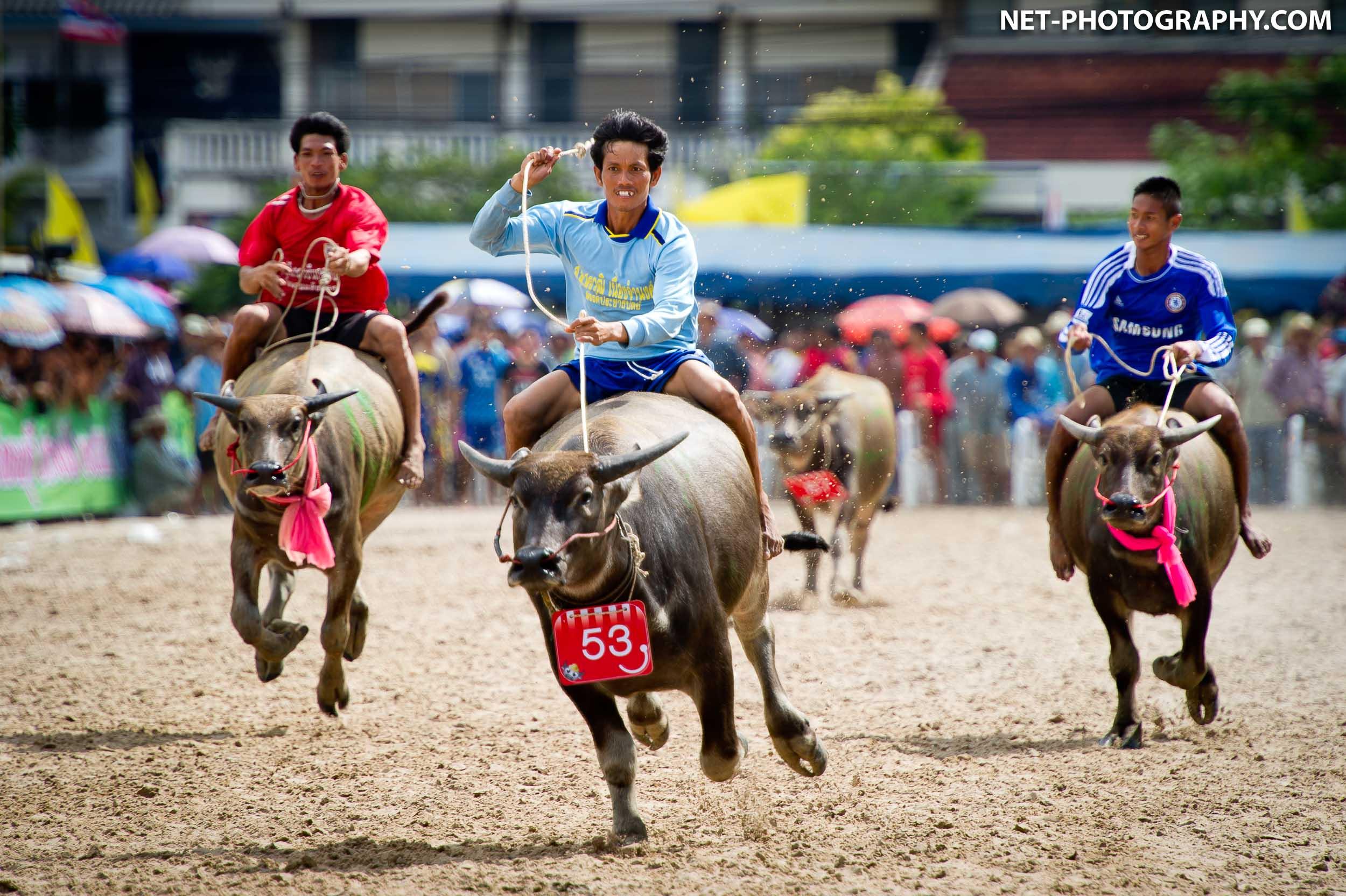 Thailand Buffalo Racing Festival 2011